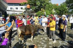 Kurban PWI Riau, 220 Bungkus Daging Dibagikan