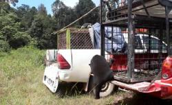Dua Ekor Beruang Madu di Ditangkap dan Langsung Dilepas ke TWA Dumai