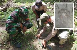 Dua Anak Sapi Mati, Diduga Diserang Harimau di Tapung Hilir