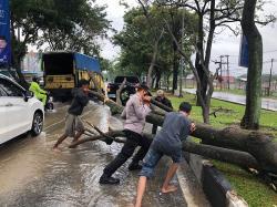 Hujan Deras, Pohon Tumbang di Arifin Achmad
