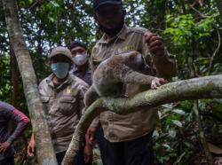 BBKSDA Riau Lepasliarkan 8 Satwa Dilindungi