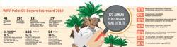 WWF Dorong Sawit Berkelanjutan