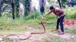 Pernah Digigit Ular Python di Bagian Kepala hingga Bocor