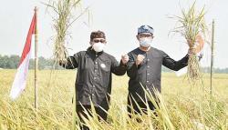 Salim dan Ridwal Kamil Tinjau Hasil Panen Petani