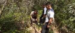 Dua Ekor Sapi di Minas Diduga Dimangsa Harimau, Ada Jejak di Area Konservasi PT Arara Abadi
