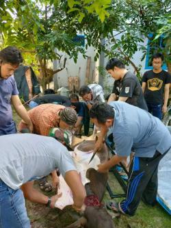 IKP Bersama YWPM Berbagi Daging Kurban ke Mualaf dan Duafa