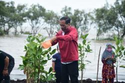 Presiden: Hutan Mangrove Berkontrobusi Besar Penyerapan Emisi Karbon