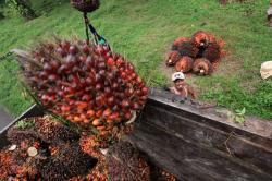 Kemendag Apresiasi Penerimaan EFTA Terhadap Sawit Indonesia