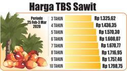 Naik Lagi, TBS Kelapa Sawit Jadi Rp2.241 per Kilogram