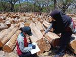 MK Kehutanan Negeri Pekanbaru Wajibkan Siswa Praktik Industri di Setiap Tingkatan
