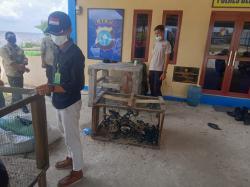 Penyeludupan 1.500 Burung Kacer asal Malaysia Digagalkan
