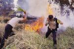4 Ha Terbakar di Pekanbaru, 5 Ha di Dumai