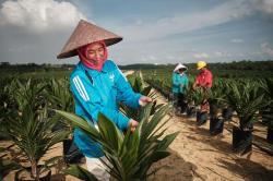 Apical dan Asian Agri Gandeng IPB Edukasi Generasi Muda