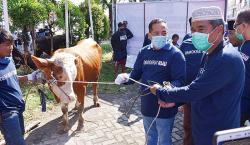 DPD Partai Demokrat Riau Potong 6 Ekor Sapi