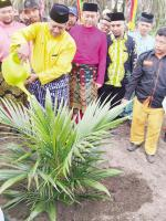 PT Palma Inti Lestari Bantu Bibit Peremajaan Sawit Rakyat