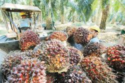 Bisnis Kelapa Sawit Makin Menjanjikan