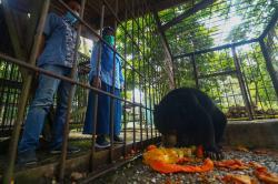 Warga Bunut Serahkan Beruang Madu ke BBKSDA Riau