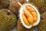 Durian Senja Pelangi yang Manis dan Pahit