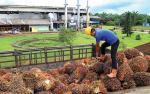 India Pastikan Bakal Impor 1,1 juta ton Olahan CPO Asal Indonesia