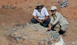 Wow... Fosil Dinosaurus Berumur 220 Juta Tahun Ditemukan