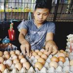 Telur dan Ayam Masih Mahal
