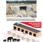 Enam Underpass Tol Pekanbaru-Dumai Spesial buat Gajah Liar