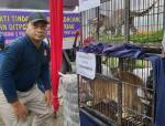 Penyeludupan Anak Singa dan Leopard Asal Afrika Digagalkan