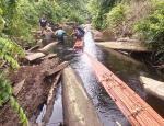 Dua Pelaku Illegal Logging Ditangkap