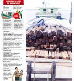 Bongkar Illegal Logging di Meranti