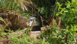 Indonesia Bantu Kongo dan Chili Dalam Mengelola Lahan Gambut