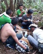 BBKSDA Riau Evakuasi Harimau Sumatera Terkena Jerat di Pelalawan