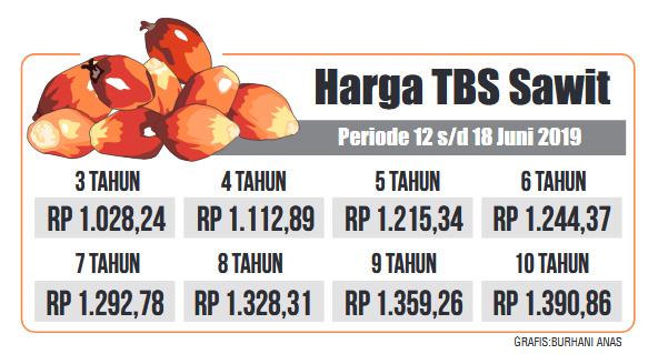 Pekan Ini, Harga TBS Kelapa Sawit Turun