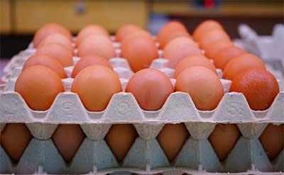 OP Telur Tunggu Instruksi Pusat