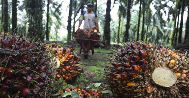 Program B30 Akan Dimulai, Bagaimana Nasib Sawit Indonesia?